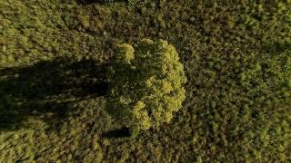 Fink - 'Bloom Innocent' (Official Video)