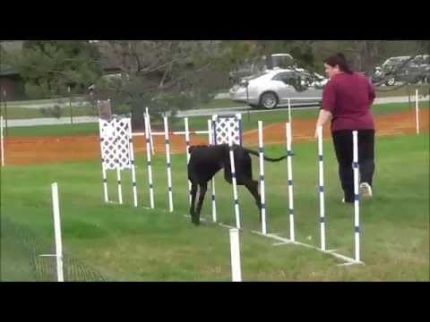 Great Danes Agility JWW Excellent - 2014 GDCA National Specialty