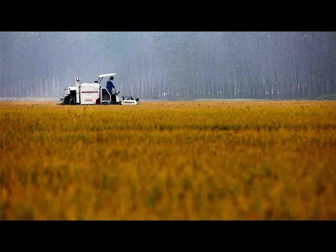 China's 'No. 1 Central Document' focuses on agriculture for 14th consecutive year