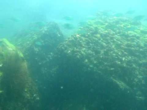 onderwater filmpje Hondarribia, Spanje