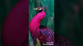 Самые красивые птицы  (фото)