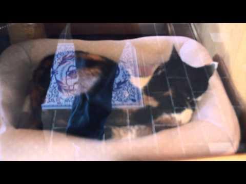 Tama the Stationmaster Cat! Wakayama Prefecture- Osaka Vlog 2