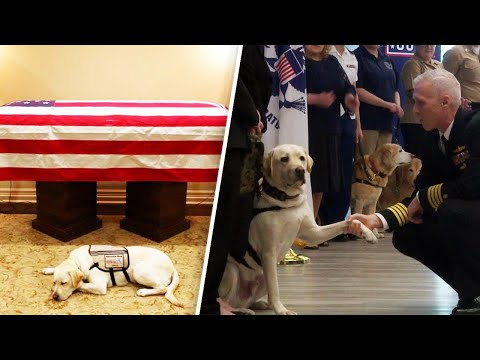 New Home for President George H.W. Bush's Service Dog Sully