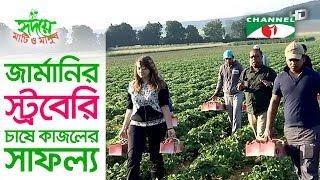 জার্মানিতে স্ট্রবেরি চাষে বাংলাদেশী কৃষকের চমক | Strawberry | Germany | Shykh Seraj | Channel i |