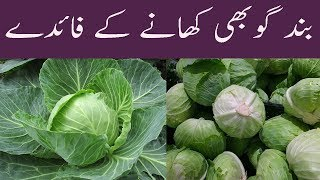 Patta Aur Band Gobhi Khane Ke Fayde Faide Amazing Health Benefits Of Cabbage In Urdu