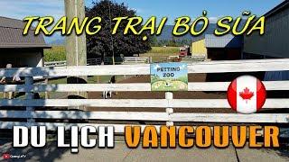 🍁Du Lịch Vancouver 🐄Trang trại Bò sữa ở Canada | Quang Lê TV #116