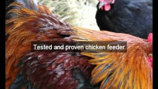 Chicken Feeders| Hens |amador |ca | Automatic Chicken Feeder | Feeding Chickens | Poultry Feeders