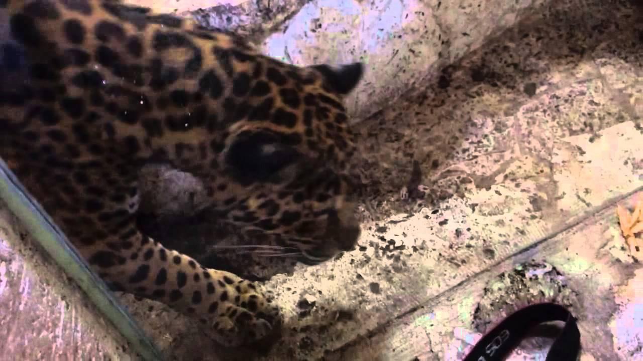 ultimate r black of watch jaguar youtube f type dallas