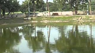 Birth Place of Goddess Sita at PUNAURA, Sitamarhi.flv