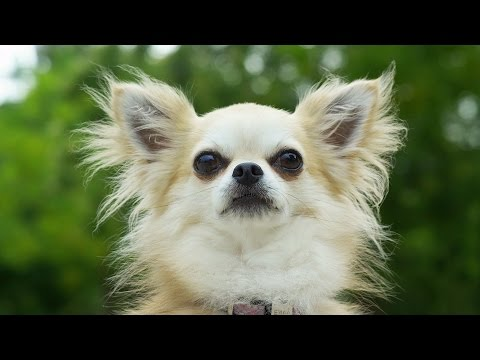 The secret smelly world of dogs | Pets - Wild at Heart: Episode 2 preview | BBC One