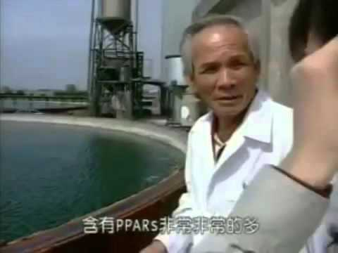 CRYPTO PPARs SINGAPORE | 引藻介绍  |  CORPORATE PROFILE