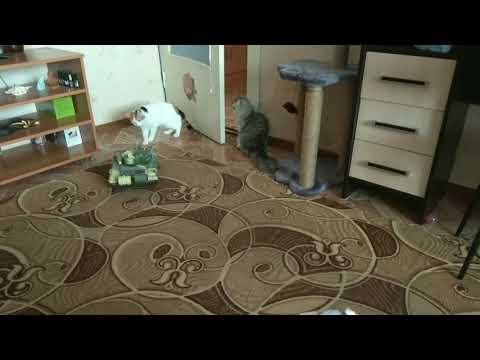 Танк навёл ужас кошки притихли