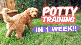 HOW TO: Potty Train Your Puppy FAST!!  10 week old puppy trained in 1 WEEK!!!