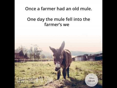 Story of a Persistent Mule - A Gift of Inspiration