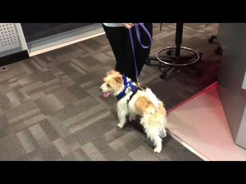 Thumbnail: Olly from Crufts on Heart