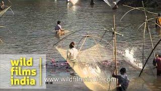 Celebrating Bhogali Bihu with community fishing, Assam