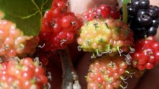 This fruits Naturally Cleanse Body Toxins and Purify Your Bloo…