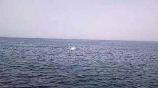 26cc Gas engine catamaran rc boat