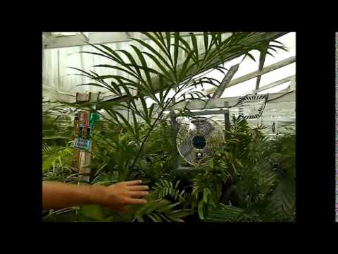 Jungle Music Palms and Cycads Picks of the Week 2