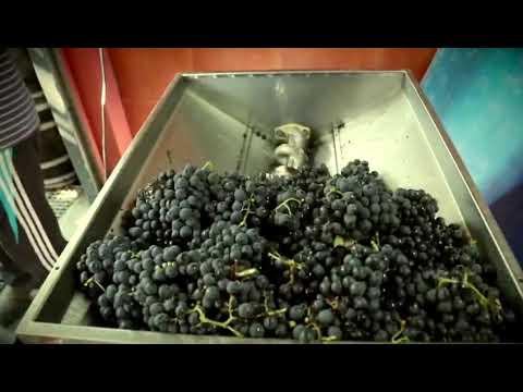 Negueira de Muñiz convídate a ir a súa Festa do Viño