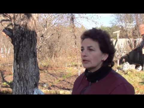 """Осенняя обрезка деревьев. Сайт """"Садовый мир"""""""