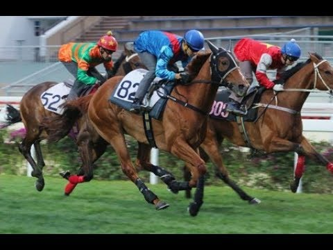 Live Horse Racing 新加坡,马来西亚,澳门,香港赛马直播