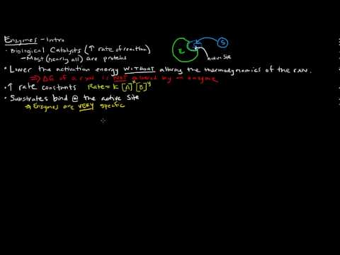 Enzymes (Part 1 of 5) - Introduction