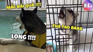 Bằng chứng cho thấy bọn Ngáo này biết nói Tiếng Việt 😂| Yêu Lu Official