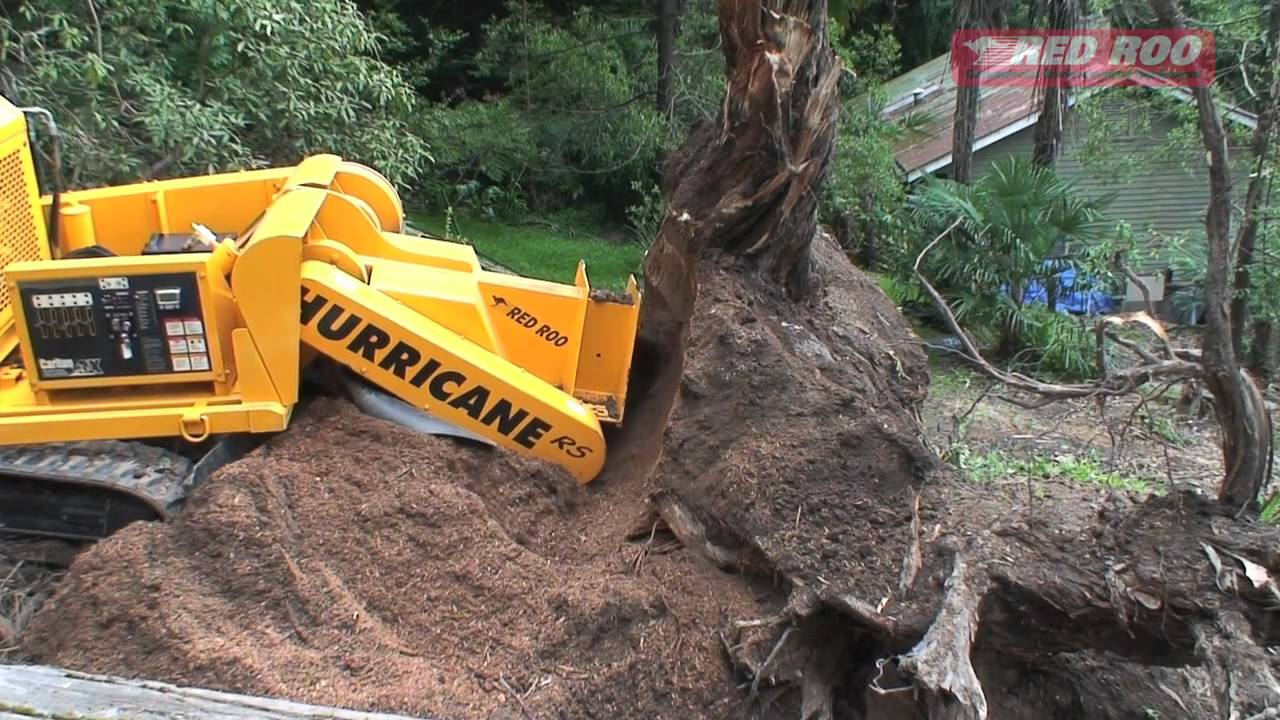 Tree Root Removal Removing Roots
