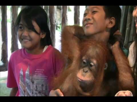 Taman Safari Indonesia (Baby Zoo) - Bogor Travel Guide (Tourism) - Indonesia Travel Guide