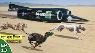 The Box Tube Season 2 - Ep 13 - বিশ্বর সবচেয়ে দ্রুতগামী প্রাণী কি? Who Is the Fastest Living Being?