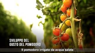 ITALIAN: KKL - JNF- Agriculture in the Negev Desert