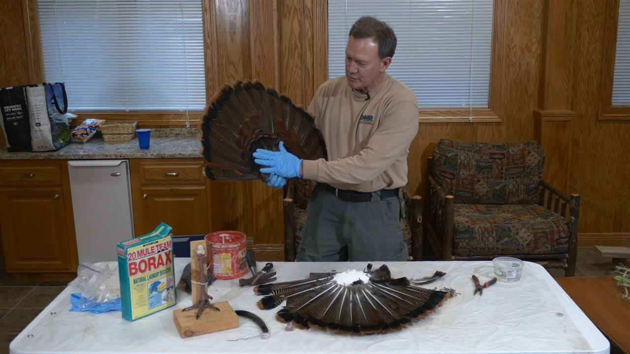 How To Mount A Turkey Tail Fan Indiana Dnr Youtube