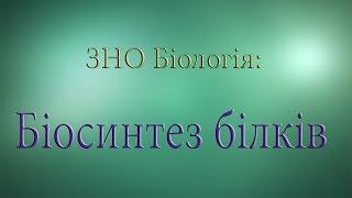 ЗНО Біологія  Біосинтез білка  Трансляція