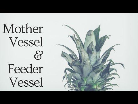 S.# 32 What is Mother Vessel & Feeder Vessel in URDU / HINDI