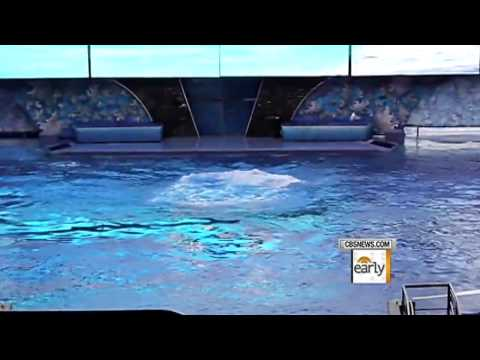 Sea World Trainers To Return To The Water