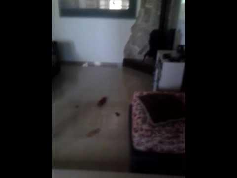 Como limpiar la casa mas rapido - YouTube