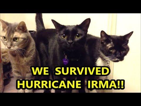 We Survived Hurricane Irma Update Monday Sept 11 Doovi