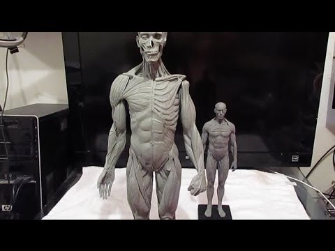 New 12 Inch Reference Figure From Anatomy Tools Youtube