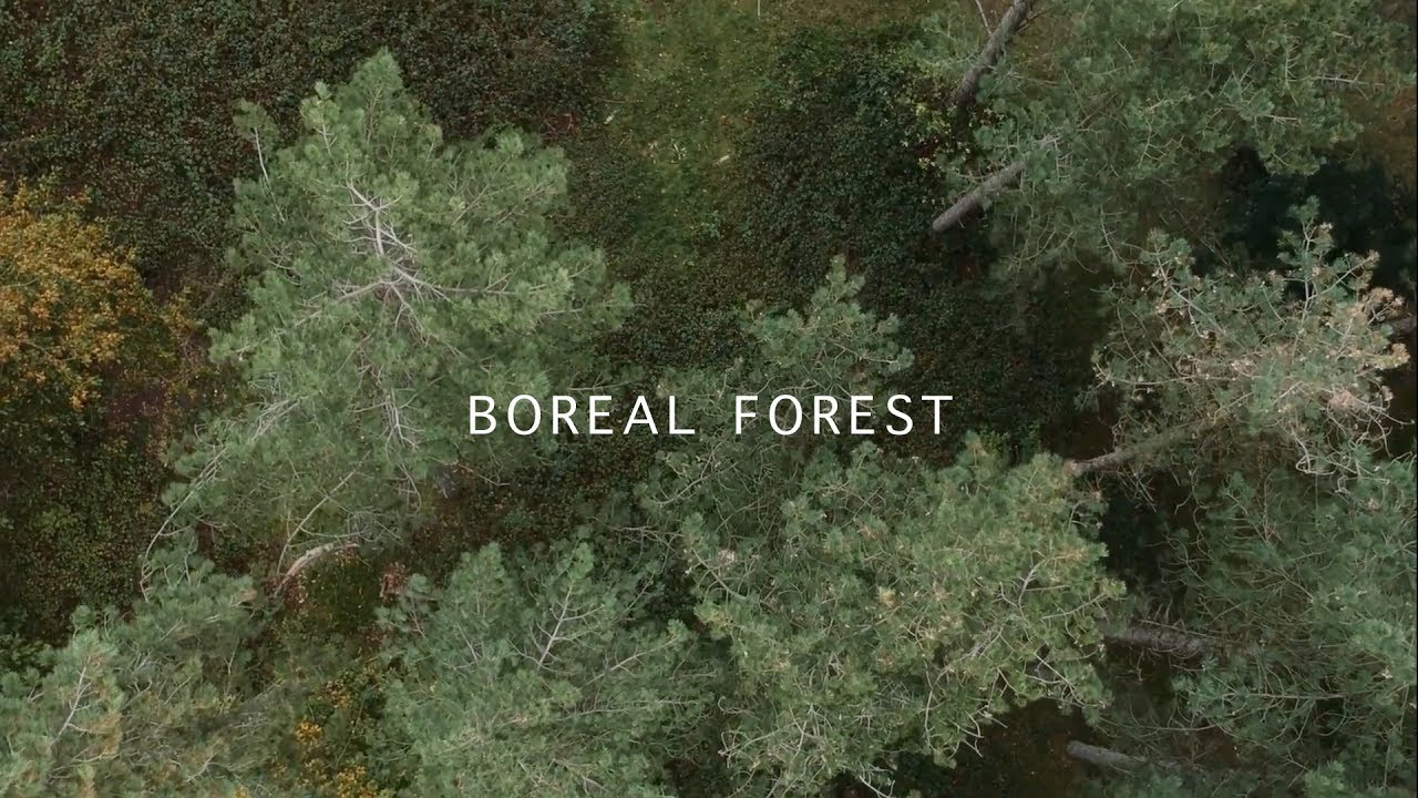 Mammal Hands Boreal Forest Official Video Gondwana