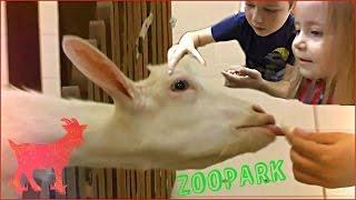 Контактный зоопарк.Дети играют с животными. Семейный поход Children play a petting zoo 2015 HD(Контактный зоопарк.Дети играют с животными. Семейный поход Children play a petting zoo 2015 HD Контактный зоопарк «Жили..., 2015-02-19T15:10:42.000Z)