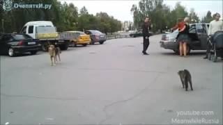 Кошка против собаки кто кого. Бросок под себя.