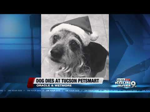 Dog Reportedly Crushed To Death During Petsmart Grooming Peta