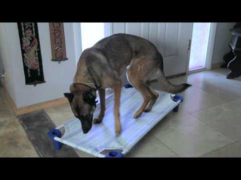 how-to-prevent-a-dog-from-chewing-on-baseboard-trim-:-dog-behavior-&-training