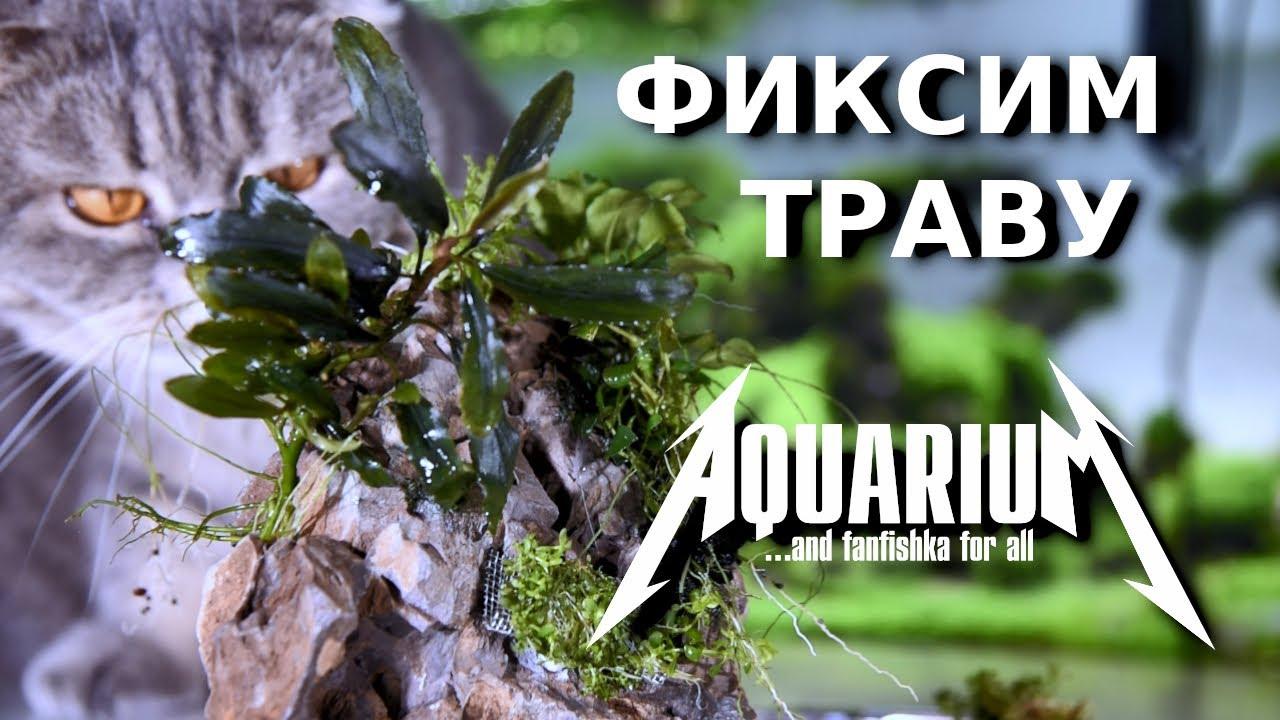 Все о закреплении растений в аквариумных скейпах