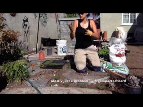 How To Amend Clay Soil U0026 Plant Elfin Thyme W: Sara Bendrick