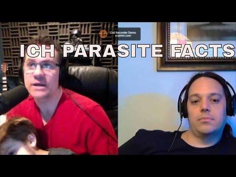 ich and marine velvet in saltwater aquarium : facts on the parasite