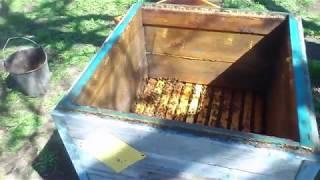 Как я расширяю пчелиные семьи весной к началу медосбора