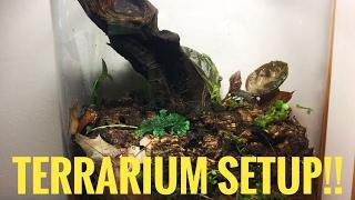 How to Setup a  Closed Terrarium!