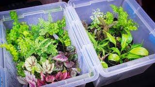 How to Clean and Quarantine Terrarium Plants